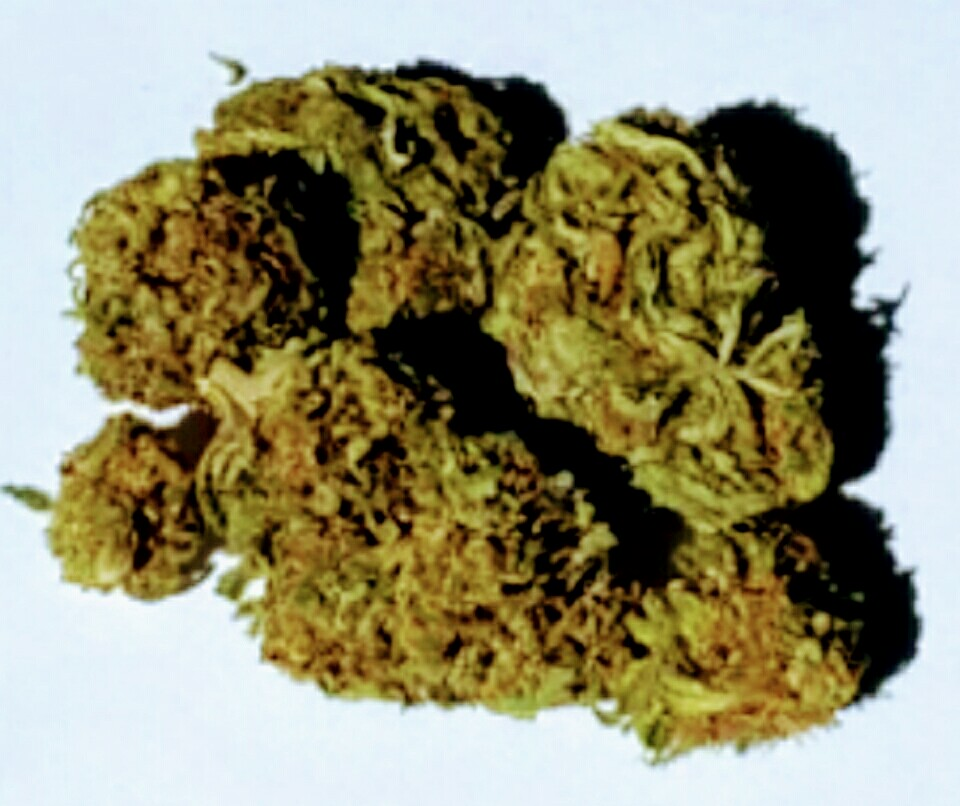 PREMIUM FLOWER STARTING @ $100 LB WHOLESALE PRICES AVAILABLE NOW!