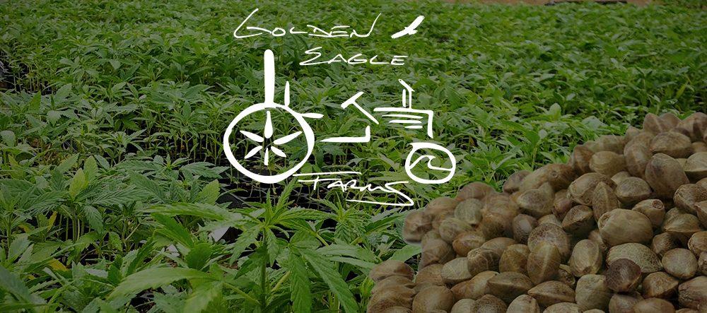 Frosted Web - Feminized Hemp Seed - Full Season - Golden Eagle Farms