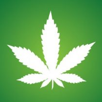 Profile picture of Hemp Source Co.