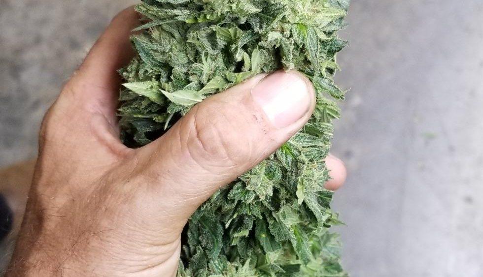 $10 Kentucky biomass and $150 smokable and up