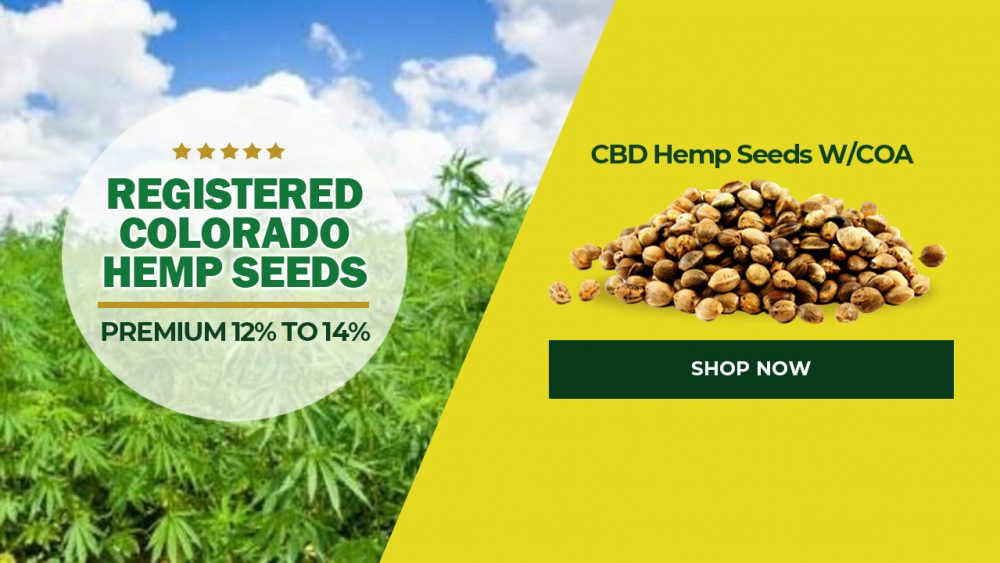 Registered Colorado Hemp Seeds Premium 12% to 14% CBD Hemp Seeds For Sale