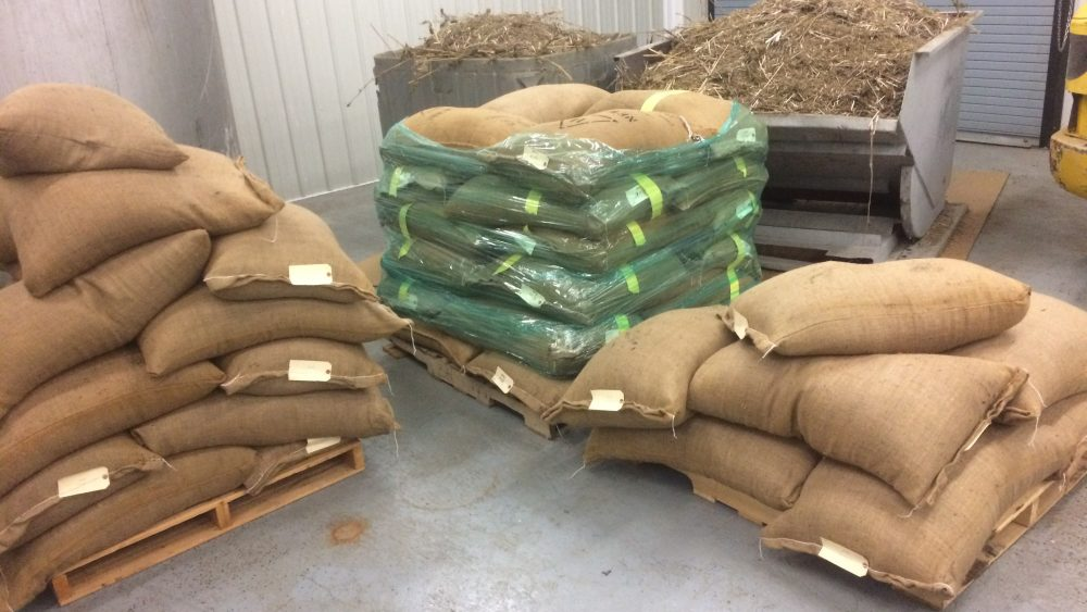 Viable CBD Hemp Seeds