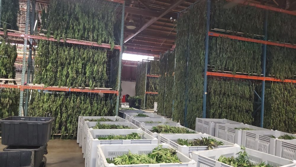 Amota Processing: Dry, Trim, Store, Sell With Us