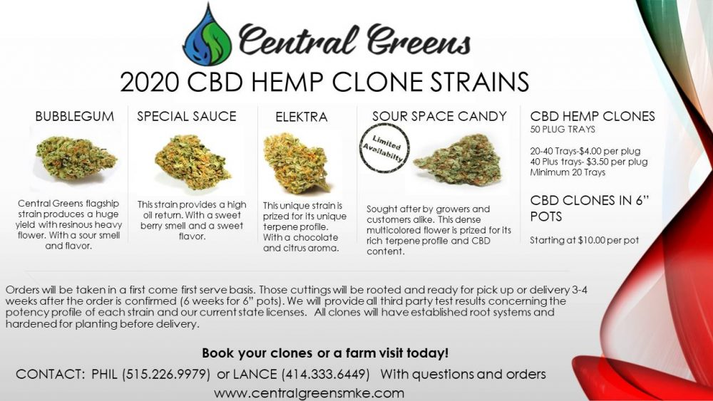 Premium high CBD hemp clones, our 2020 genetics are exactly what you are looking for.