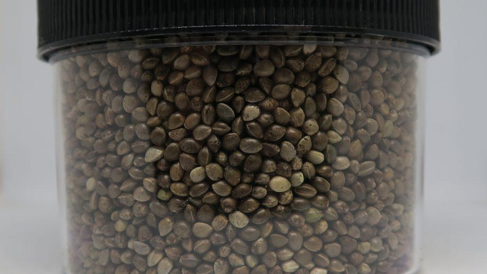 Tested Fem Hemp Seed and Clones CBD/CBG