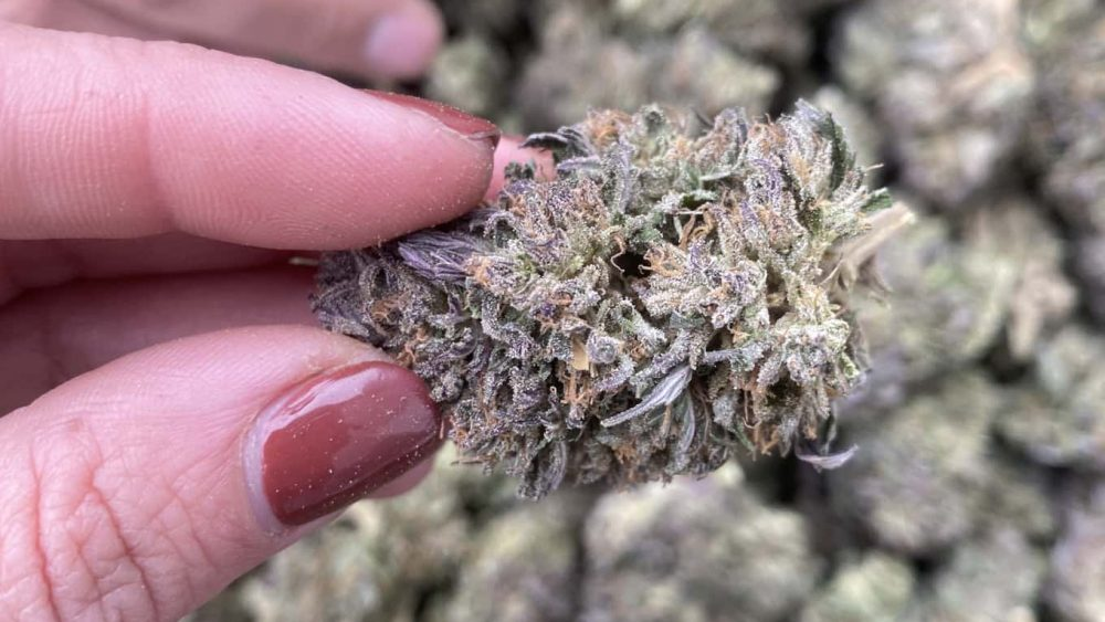 FIRE BUBBA KUSH SALE! We ship International