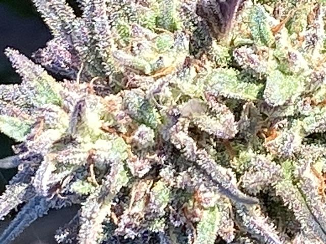 Premium top flower: High CBD 16.4-21.1  Remedy, M17, and J7/28