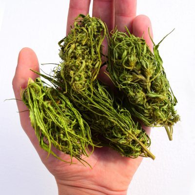 Premium quality Hemp Buds - EU certified - Hand Picked - Hemp buds for tea, smokes or CBD extraction