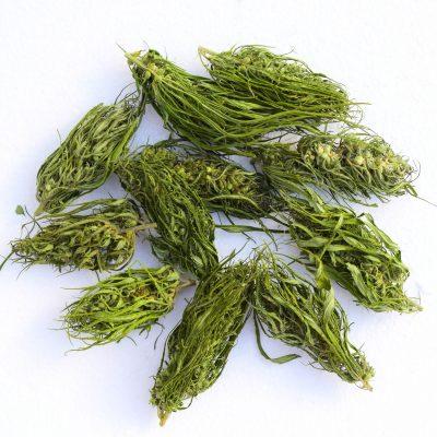 EU certified Hemp flower material - Futura 75 variety - high quality hemp flowers 25 Eur/Kg