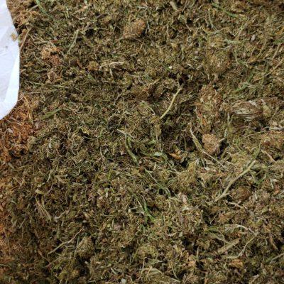 Biomass for extraction. Kentucky hemp 10% CBD