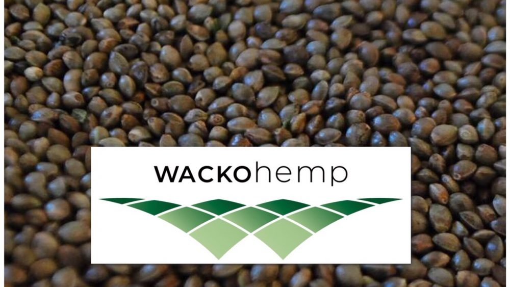 Organic Colorado Hemp Seed - 2 Strains Available