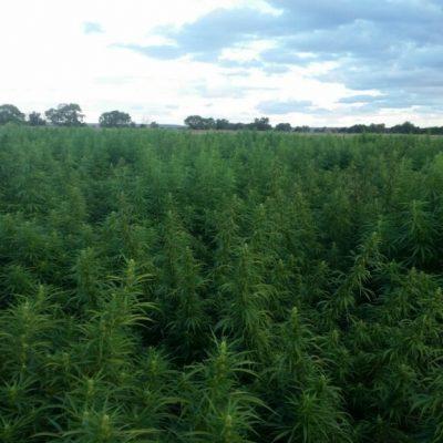 Colorado Hand Harvested Biomass
