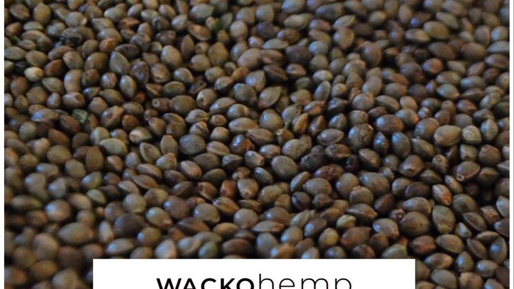 FIRESALE: High CBD, low THC organic non-feminized seed