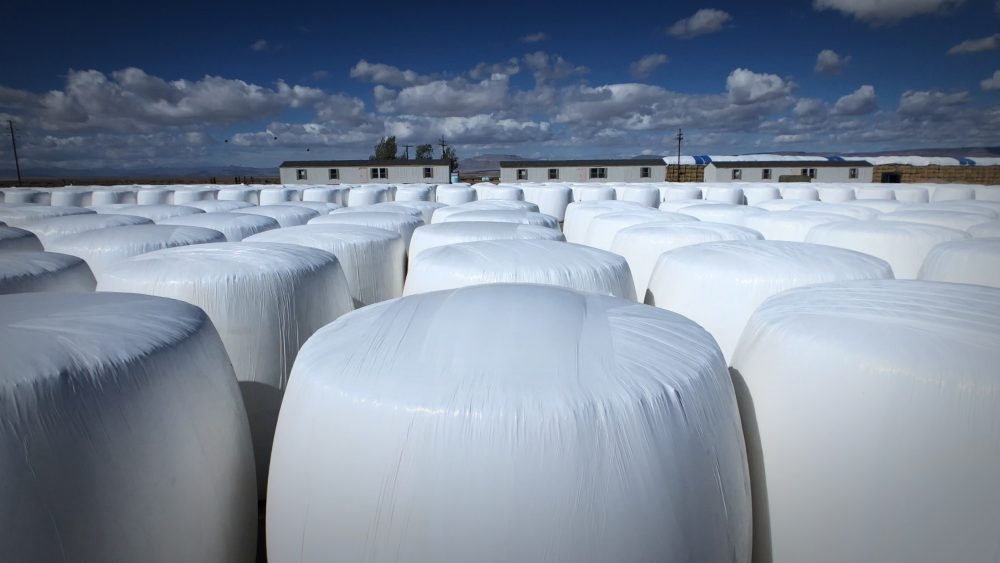 300,000 lbs Biomass for sale