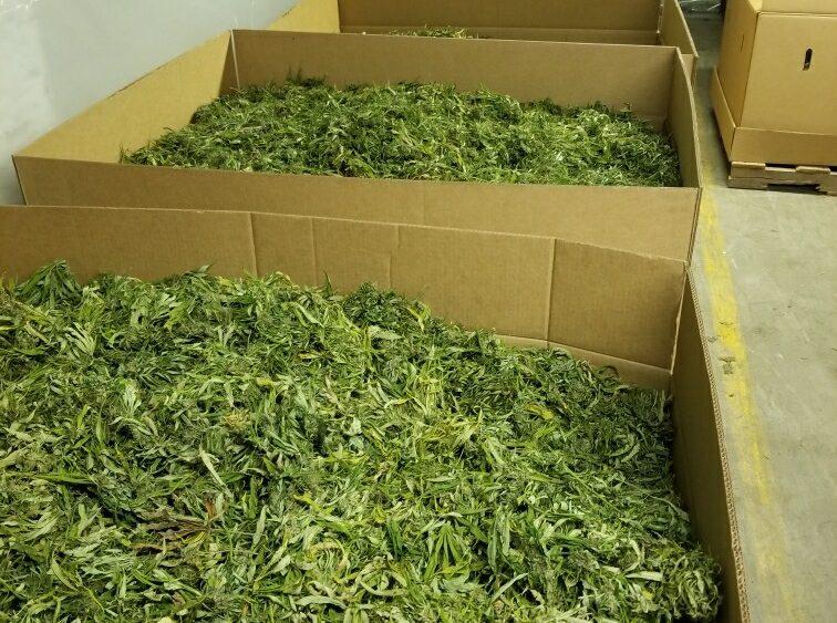 Premium Flower/Biomass
