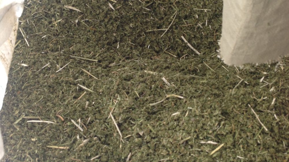 Raw Hemp Biomass (combined)