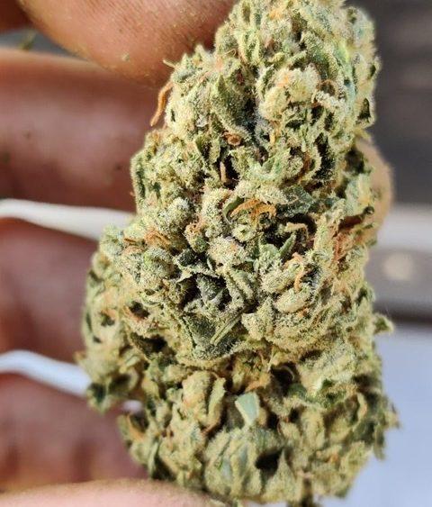 Organic Cali Grown Seedless Bubba, Sour Space Candy, Hawaiian Haze