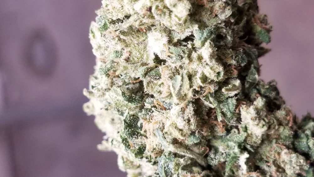 Winter close-out sale!!! 15% CBD for $275/lb. Premium, USDA certified organic smoke-able Flower!
