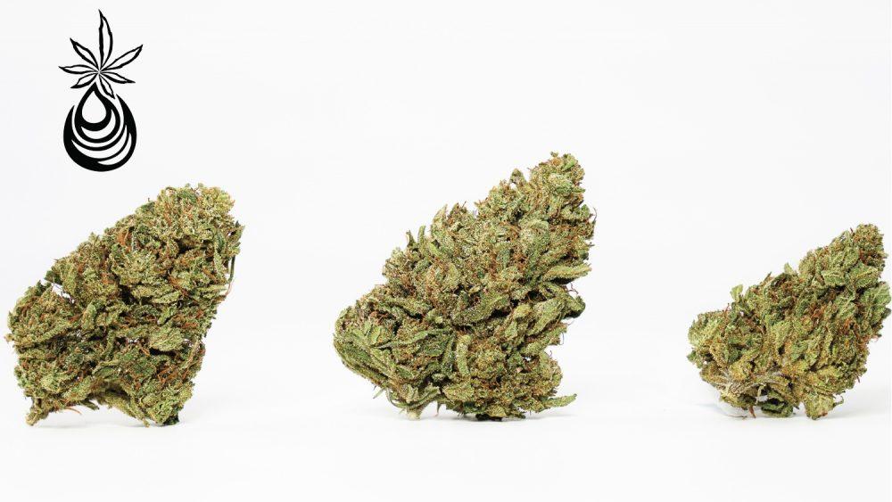 Clean & Green Sour Funk 18-23%