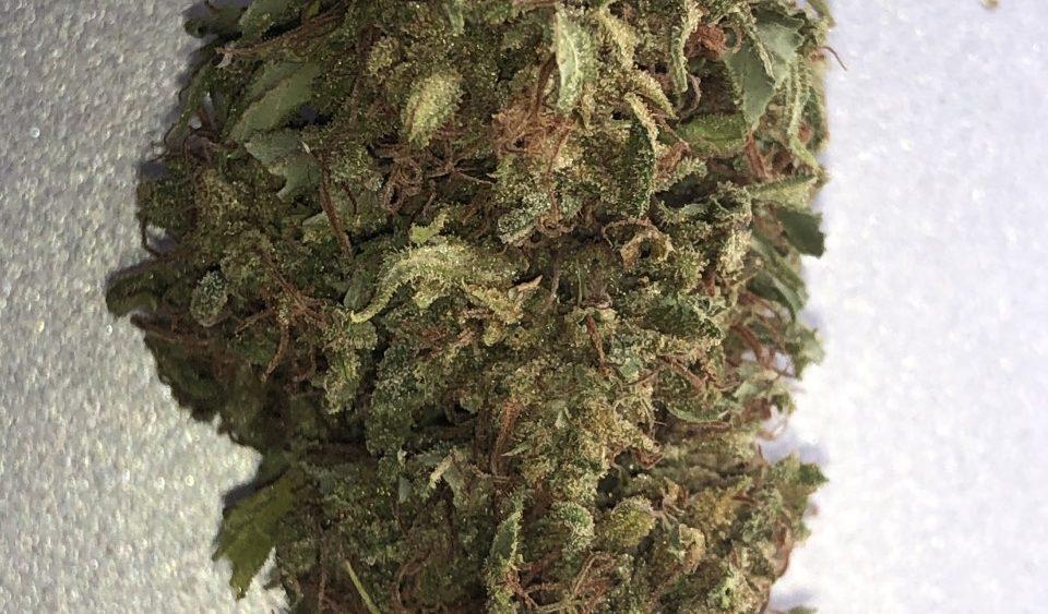 CLOSEOUT BULK SALE - TAKING OFFERS ON ALL - (Tenn) High Quality Lifter/Suver Haze  Flower/Trim/Kief