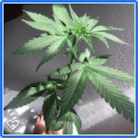 CBG Seedlings! 18-30