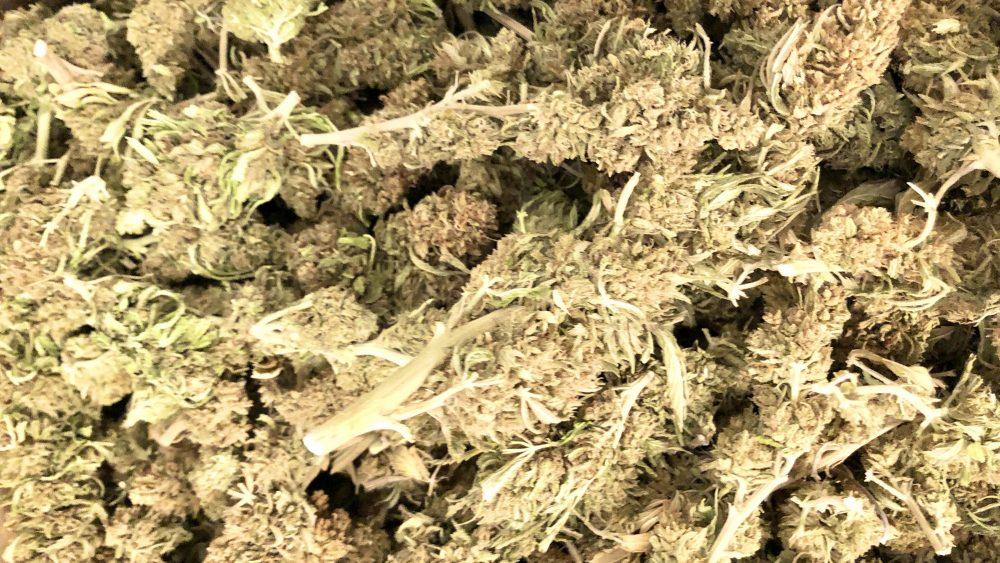 Free  Shipping $100/lb Seed Free Trimmed Smokable Stormy Daniels & Kentucky Cherry 16% CBD