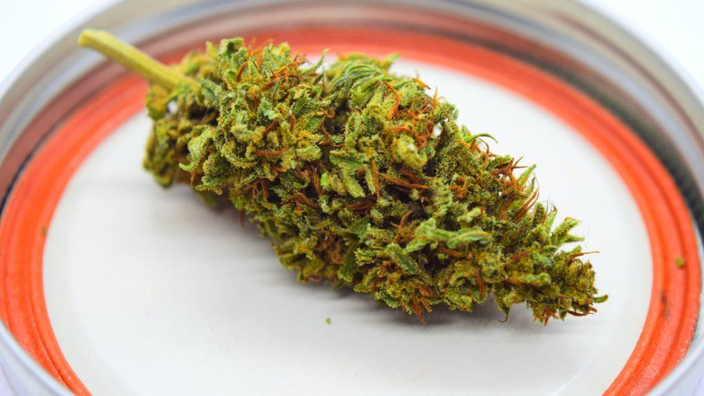 PRICE DROP on 2020 Hemp Flower - Save Big on Oregon Sun Grown Hemp  - Terpy/Dense Trimmed Flower