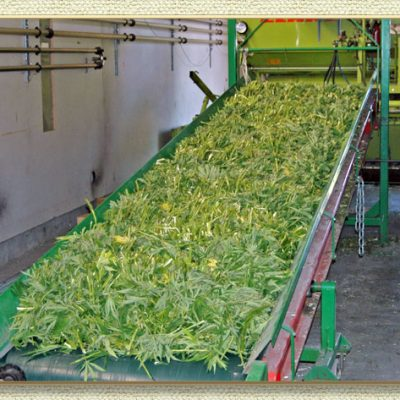 Harvest, Drying, Storing, Brokering of your CBD Hemp Biomass