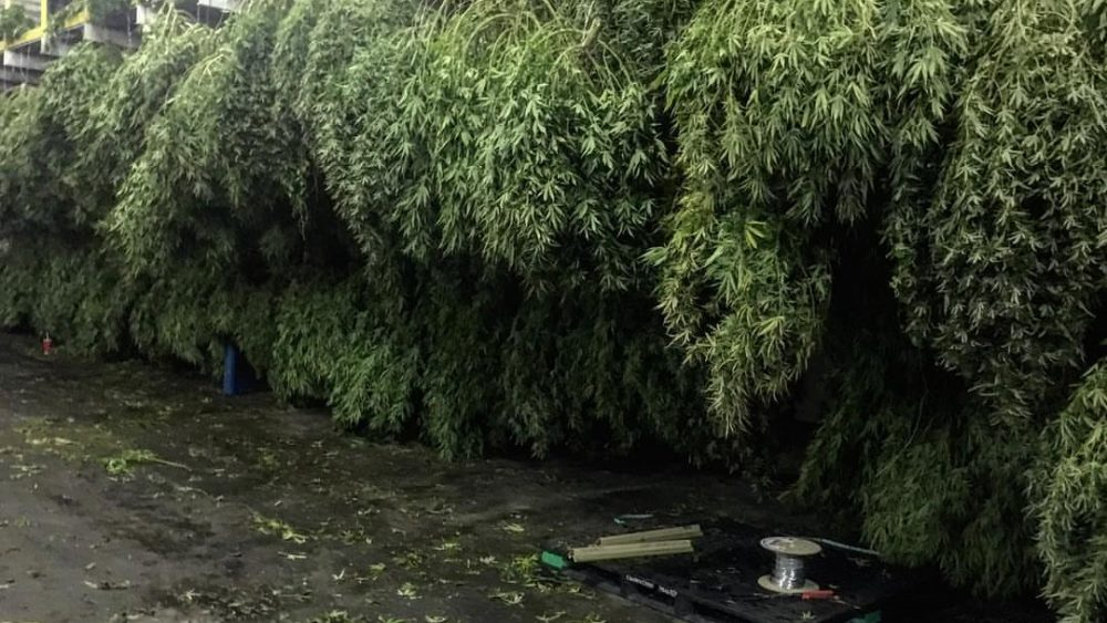 Full Spectrum ,Broad Spectrum &Crude CBD Distillate  Now Available