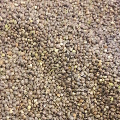 Colorado Hemp Seed
