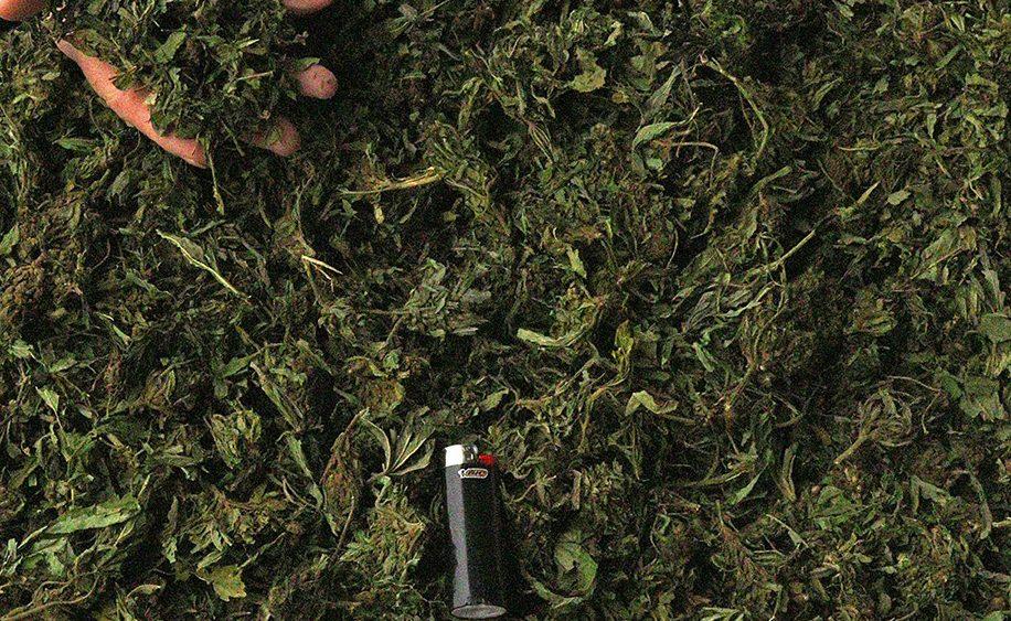 Special Sauce Hemp Biomass- Lots @ 12% CBD