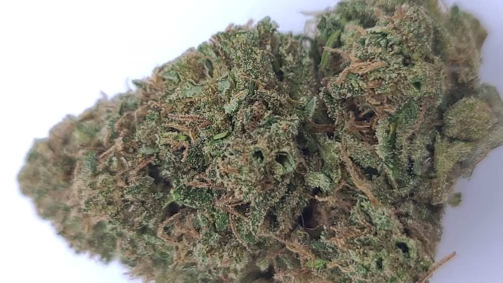 Craft quality trimmed Lifter, Super Sour Space Candy, CBG, Special Sauce. Post harvest sale!