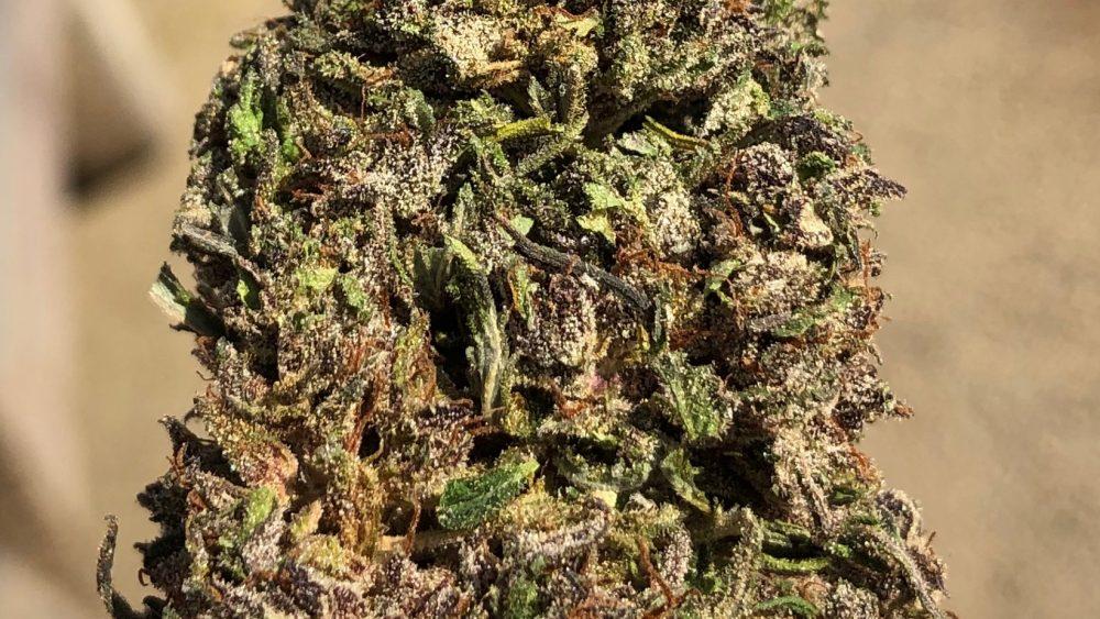 Clean Green Certified Top Flower