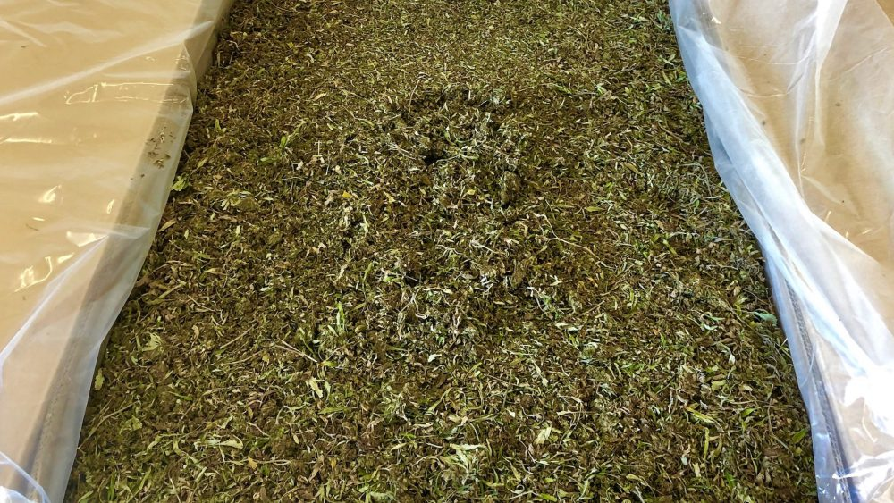 12% + Quaility CBD Biomass for Sale. Eastern North Carolina. I can deliever to surronding states.