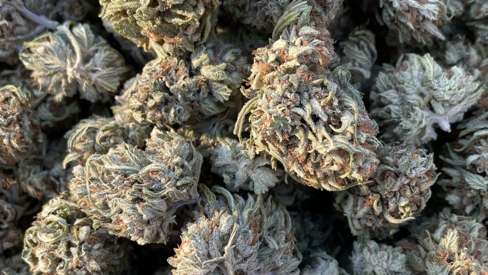 CBG White Flower - $100/lb (Certified Organic)