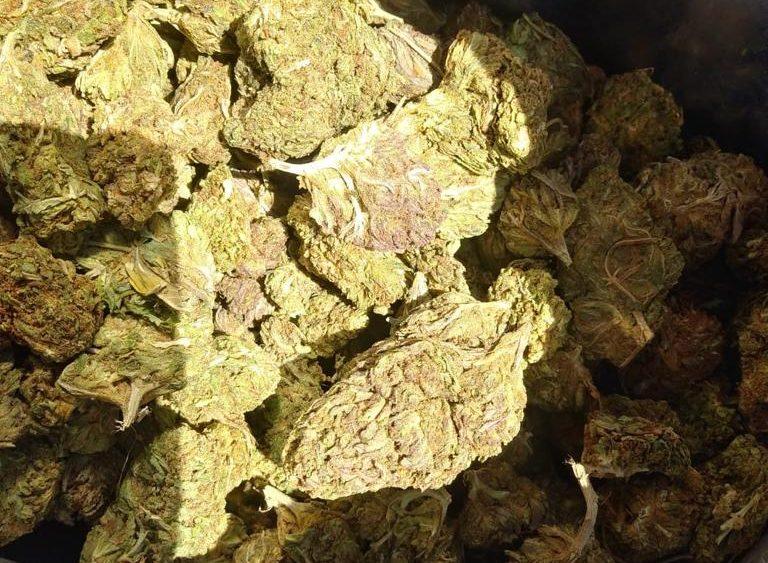 30k lbs High Quality Smokable Flower in Oregon