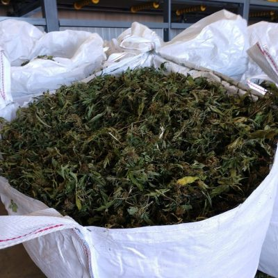Beautiful, hand harvested OR CBD flower & leaf - 10-20% - 200K lbs @$3.50%