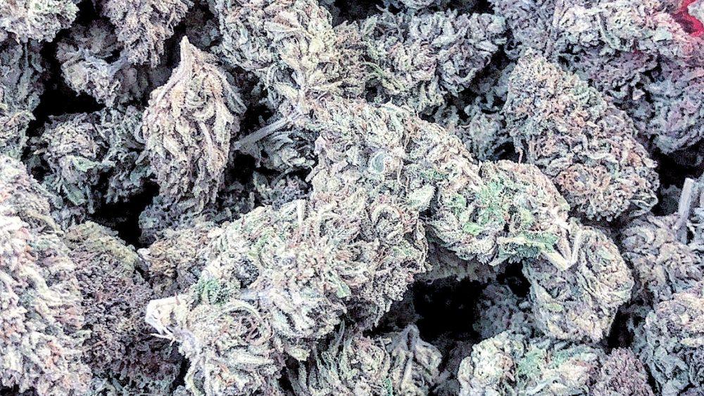 Lifter CBD flower 20%