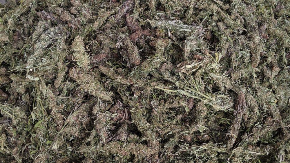 Hand-stripped dry biomass %19.78 CBD $19 per lb.