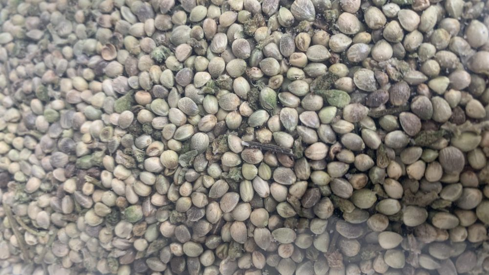 Bulk Hemp Seeds CHEAP