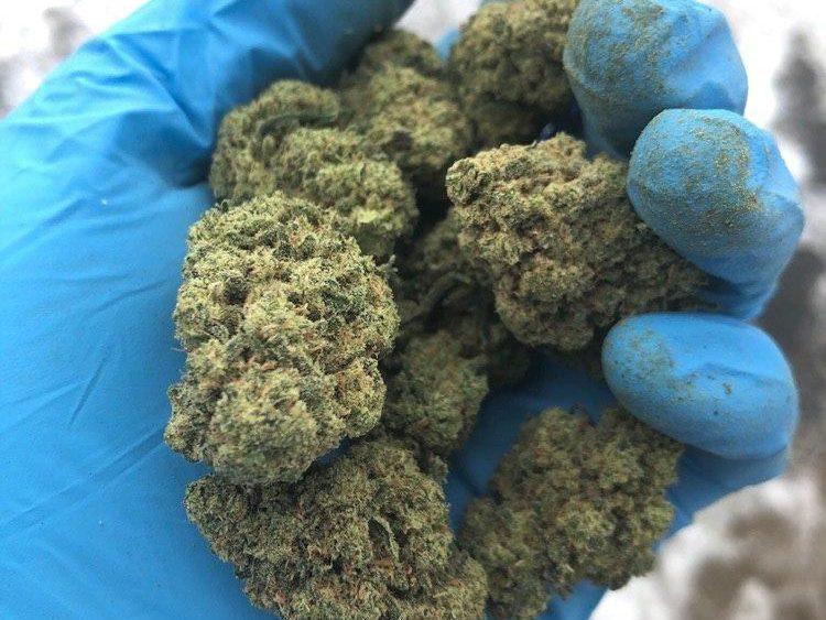 USDA Organic Certified true INDOOR 22% CBD Wife and Charlotte's PREMIUM hemp flower.
