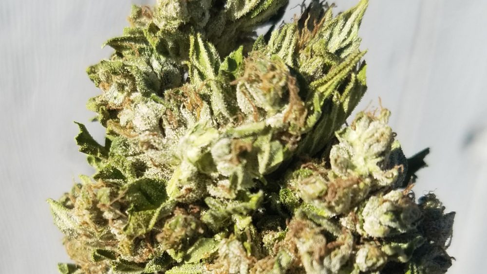 High Grade Seedless Valentine Kush Flower Grown organically in Central California