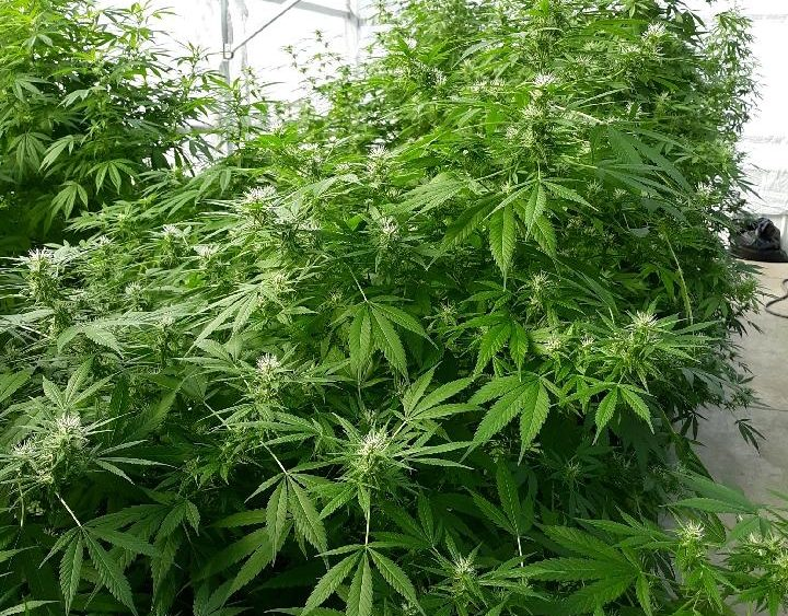 Hemp Greenhouse Growing Business in Wisconsin For Sale