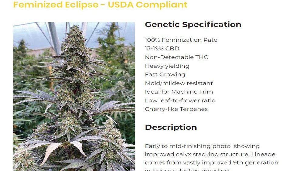 Feminized Eclipse Seed / Non-Detectable THC!! High CBD% compliant worldwide!