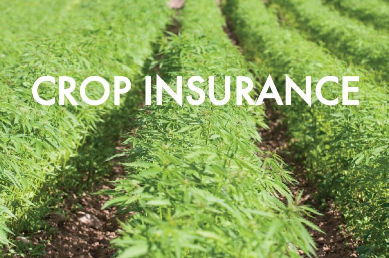 Open-Air Crop Insurance Policies