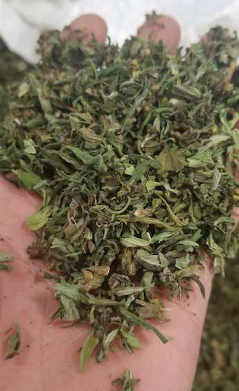 Various Strains of High-Quality Hemp/CBD Biomass for Sale