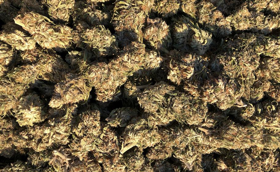 CBG -'The White' - Flower / Trim / Biomass