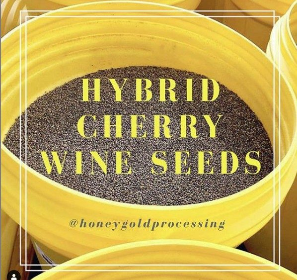 Viable Cherry Wine Hemp Seeds