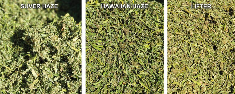 SUPER STICKY TRIM ---> FROM HAWAIIAN HAZE, LIFTER, & SUVER HAZE -  OREGON GROWN!