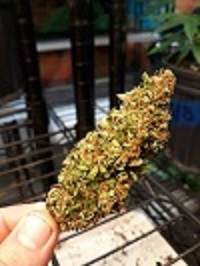 Smokeable flower